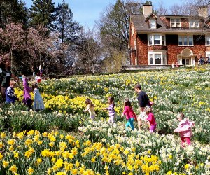 Enjoy the sunshine and the daffodils at the Reeves-Reed Arboretum's Daffodil Day on Sunday, April 18. Photo courtesy of the arboretum.