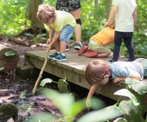 Children explore nature in Darien. Photo by Julia Arstorp Photography courtesy of Darien Nature Center