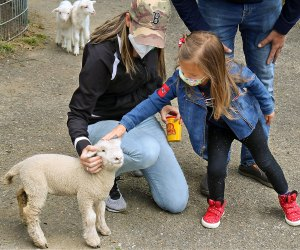 Davis Farmland has baby goats ready to meet and greet. Photo by Linda M. Davis