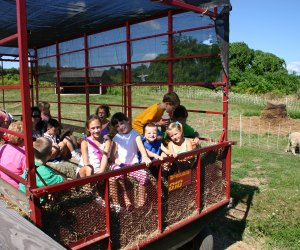 The Safari Hayride at Davis Farmland concludes with a visit to the farm animals. Photo courtesy of Davis Farmland