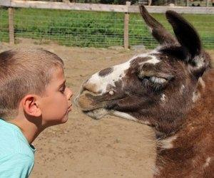 Make a new friend! Photo courtesy of Davis Farmland