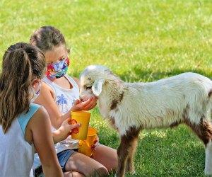 Make a new furry friend! Photo courtesy of Davis Farmland