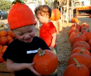 From local parking lot patches to farms near Los Angeles, here's where to find your perfect pumpkin.