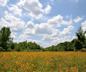 Enjoy the wildflower meadow at Delaware Canal State Park near the Giving Pond. Photo courtesy of PA DCNR