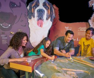 The Museum of Science, Boston hosts an exhibit all about our best friend, the dog. Photo courtesy of  the museum