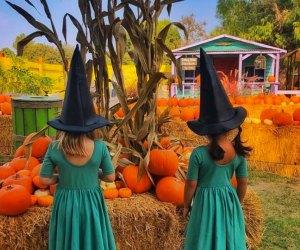 Hitch a ride to the El Dorado Frontier Pumpkin Market. Photo courtesy of theeldoradofrontier.com