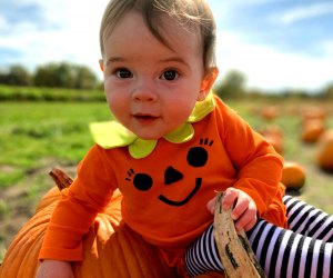 Bring your little pumpkins, or big ones, to Concord pick-your-own jack o' lantern. Photo courtesy of Verrill Farm.