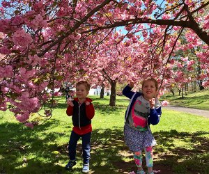 Celebrate spring at the Essex Country Cherry Blossom Festival. Photo by Rose Gordon Sala