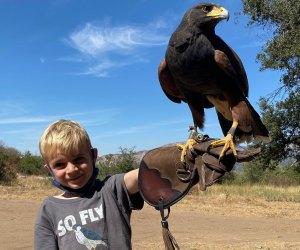 Learn to fly a falcon! Photo courtesy Sky Falconry