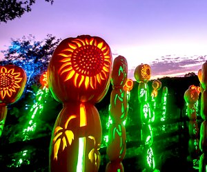 New Yorkers can see the Great Jack O'Lantern Blaze in two suburban locations on Long Island and in Westchester. This seasonal attraction is one of our favorite fall activities. Photo courtesy of Historic Hudson Valley