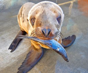 Photo courtesy of the Marine Mammal Care Center