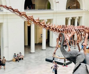 The Field Museum is home to some of the country's most complete dinosaur skeletons.