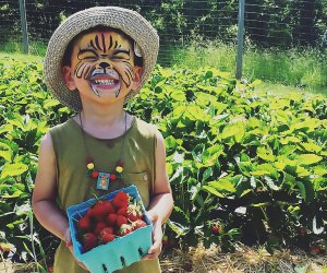 Fresh picked strawberries and more fun away at Fishkill Farms