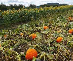Let the hunt for the perfect pumpkin begin at Fishkill Farms.