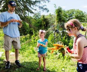 Celebrate Food and Farm Day on Saturday at Cold Spring's Glynwood Farm. Photo courtesy of the center