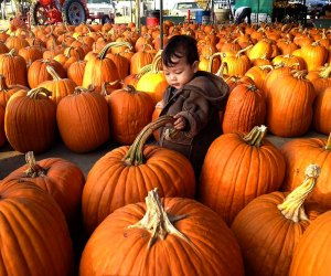 The Best Pumpkin Patches near Los Angeles: Forneris Farms