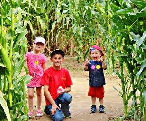 Best Corn Maze near Los Angeles: Forneris Farms