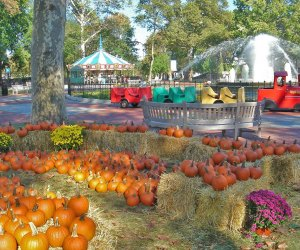 Photo of Franklin Square Pumpkin Patch by G. Widman