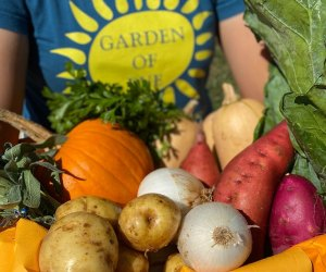 armful of vegetables