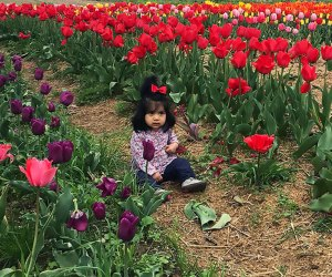 Garden of Eve is awash in colors for its annual Tulip Festival. Photo courtesy of the farm