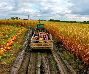 Go for a hayride, pick a pumpkin, or get lost in a corn maze at area farms, such as Siegel's Cottonwood Farm. Photo courtesy the farm
