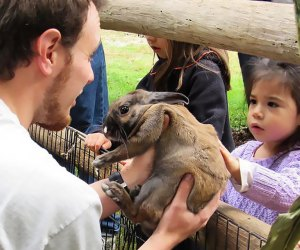 Hold rabbits at the Greenburgh Nature Center.