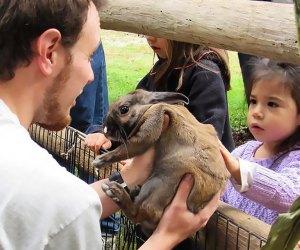 Hold rabbits at the Greenburgh Nature Center.