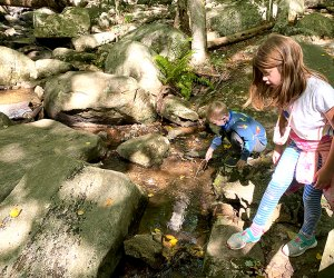 Play in the stream along the hiking trail at Hacklebarney State Park.