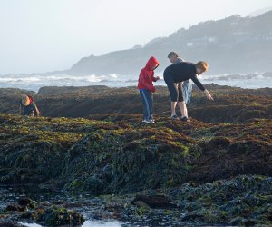 Road Trip on the PCH: Tide Pools in Half Moon Bay