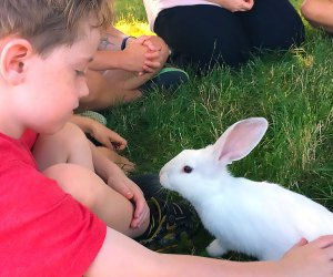 boy petting a bunny Hallockville Museum Farm