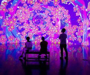 Hanami: Beyond the Blooms is an immersive, multi-room experience that takes you on springtime renewal journey. Photo courtesy of Artechouse
