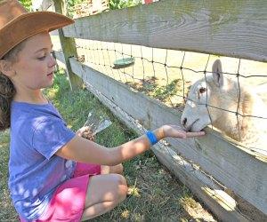 Girl feeds a sheep at Harbes Family Farm and VIneyard