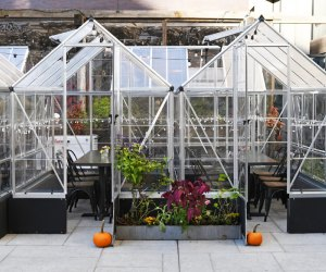 """Harper's Garden in Center City offers """"greenhouse"""" dining. Photo courtesy of Harpers Garden"""