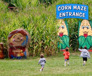 Heaven Hill Farm's corn maze opens Saturday, September 12 for fall fun. Photo courtesy of the farm