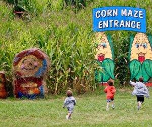 Kids run toward the corn maze at Heaven HIll Farms