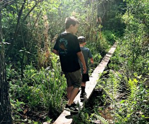 Challenge yourself on the walking beams at Hidden Waters Preserve.