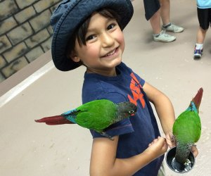 The tropical birds at the Long Island Aquarium sure aren't shy.  Photo courtesy of the aquarium.