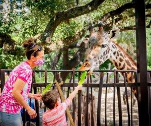 Photo courtesy of the Houston Zoo
