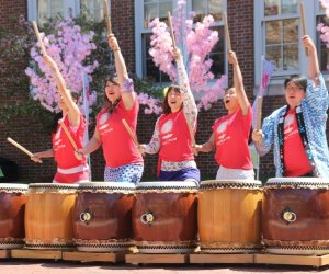 Enjoy music along with spring's signature pink blooms in Brookline. Photo courtesy of Brookline Cherry Blossom Festival