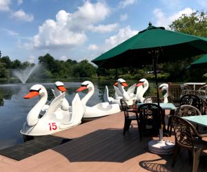 Swan boats at Verona Park
