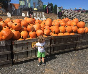 Is fall the best season? From pumpkins to halloween to harvest festivals and just plain crunching through golden leaves, there is so much for kids to enjoy