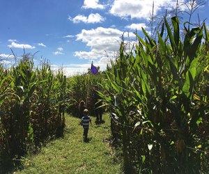 Small children navigate teh Amazing Maize Maze
