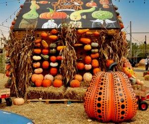 Jack's Pumpkin Pop-Up in Chicago, photo courtesy of Fatima Sitabkhan.