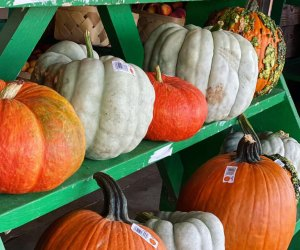 Pick a pumpkin at Jaemor Farm. Photo courtesy of the farm