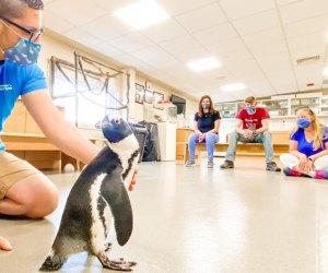 Jenkinson's Aquarium penguin show New Jersey Boarawalks