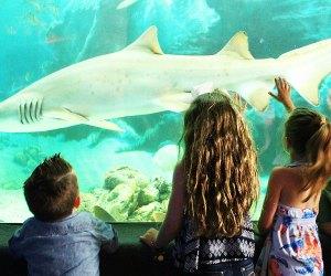 kids look at sharks at Jenkinson's Aquarium.