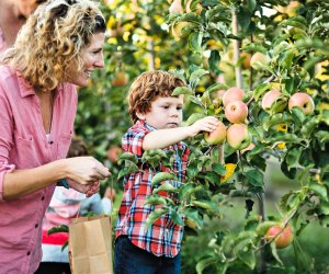 Enjoy picking and other family-friendly activities at Johnson's Corner Farm. Photo courtesy of the farm