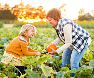 Fall pumpkin picking at Johnson's Corner Farm. Photo courtesy the farm