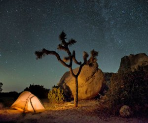 Ryan Campground, Joshua Tree National Park. Photo by Hannah Schwalbe/NPS
