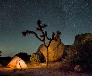 Camping at Joshua Tree National Park. Photo by Hannah Schwalbe/NPS
